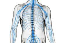 Photo of Для чего делают пункцию спинного мозга и больно ли это?