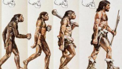 Photo of 10 самых нелепых научных мифов