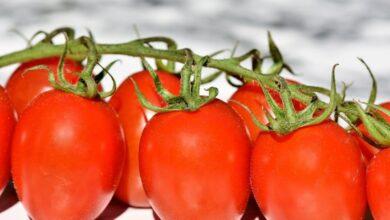Photo of Для здоровья и стройной фигуры: на какие овощи и ягоды следует налегать летом